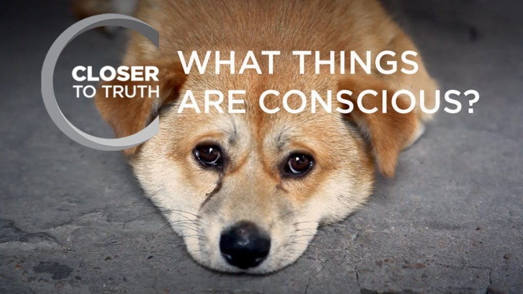 What Things are Conscious? | Episode 508 | Closer To Truth